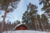 Real forest - we don't have much of this around Tromsø :)