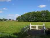 A field near Elswout