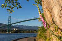 Foxglove and the Lions Gate Bridge