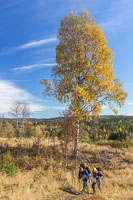 Autumn landscape on the way back - in the distance you can just about see the cabin