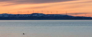 The windturbines on Vannøya, and a group of porpoises in the foreground