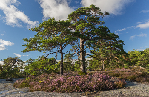 So pretty with all the heather!
