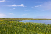A lake full of birds near the sea
