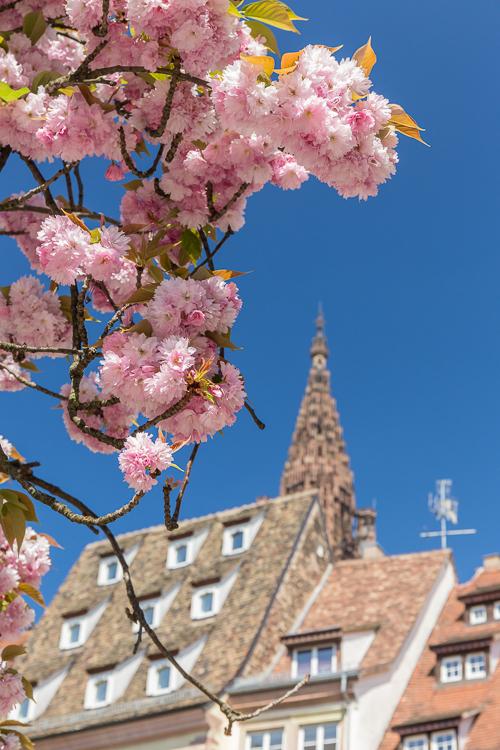 Pretty pink flowering tree