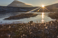 Sunset, cotton grass, a frozen lake and Tromsdalstinden - so pretty!
