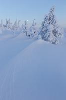 The windblown top of Riisitunturi