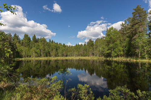 A small lake in the middle of the forest