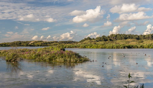Het Vogelmeer, or bird lake, on a really nice evening