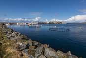 The harbour of Torsvåg