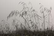 Wet grass in the fog