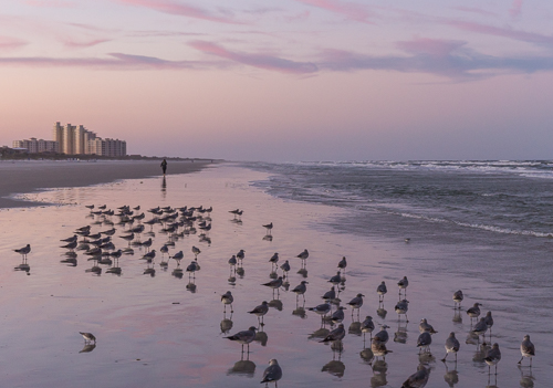Birds at sunset on New Smyrna Beach