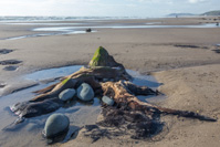 The tree trunks are only visible at low tide, and apparently sometimes even then they are covered in sand