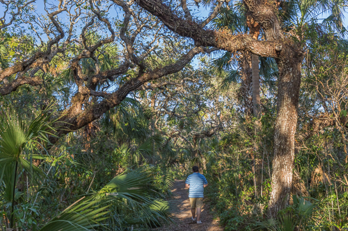 Going for a walk in Canaveral National Seashore