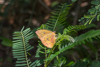 The only butterfly I managed to capture - there were some huge fluorescent blue ones flying around, but they never sat down!