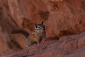 Ok, last photo of the chipmunk... there are so many of them that you stop taking photos at some point ;)