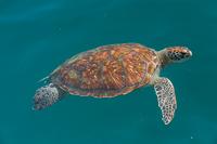 A sea turtle!!