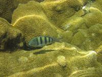 Pretty fishes :)