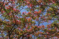 A tree with red flowers