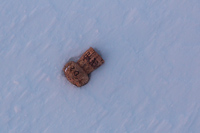 A lonely champagne cork in the snow