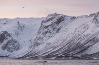 Watching the mountains in the beautiful winter light was almost as much fun as watching the whales!