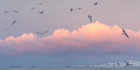 Birds & pink clouds :)