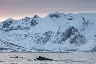 The kayaker looks tiny next to the whale...