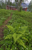 Pretty path to the cabin, but the ferns wouldn't sit still for the photo!