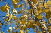 Autumn leaves moving in the breeze