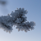 Beautiful ice crystals!
