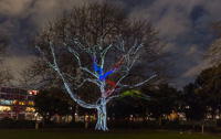 Tree with birdhouse - the birds fly along the tree and colour the branch behind them - really magical effect