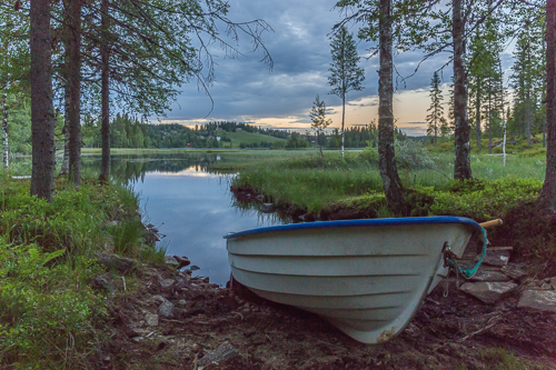 A rowing boat in the forest