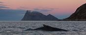 Whale & Håja
