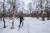 The rollercoaster path through the forest near Abisko