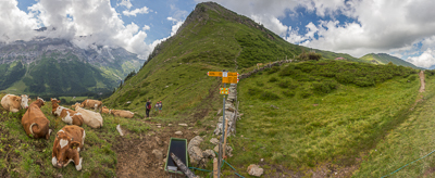 Col deVoré(1910 m), and lots of cows. And people ;)