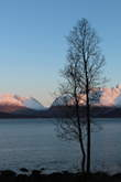 A tree and the Lyngen Alps - winter is on its way
