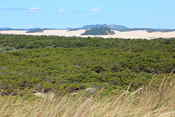 The Oregon Dunes National Recreation Area - an area with lots of sand dunes. They would sometimes spill over the road!