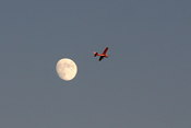 I noticed this small plane flying near the moon - they must have had a nice view!