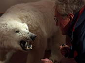 Joop getting ready to fight a polar bear