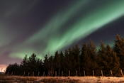 Northern lights and Christmas trees :)