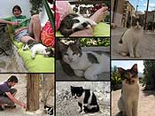 Cats are everywhere... I believe they are stray cats, but they look healthy and well fed