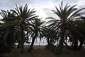 The palm beach at Vai...