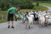 Paul getting friendly with a herd of goats