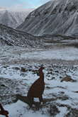 On the way to the glacier we found this shooting practice animals - this one was the most realistic, the other ones were all farm animals like sheep and pigs!
